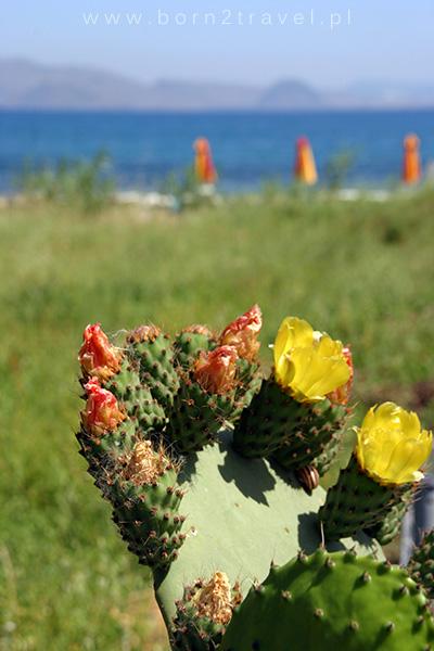 Nawet kaktusy zakwitły!