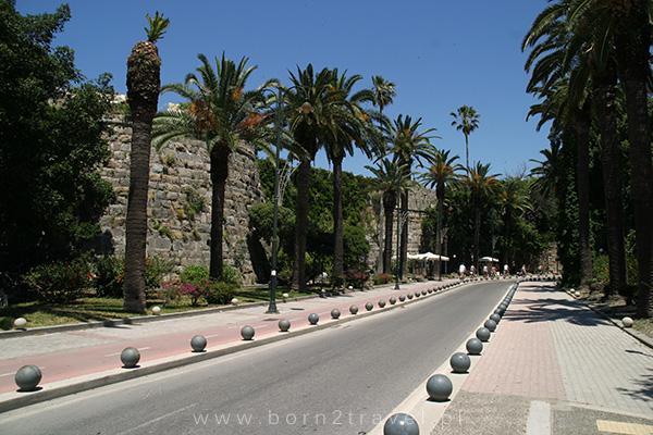 Droga obsadzona palmami - lubimy takie widoki!