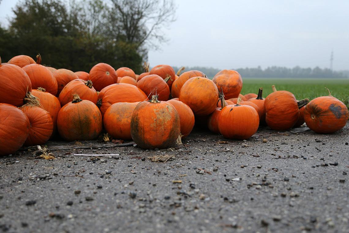 Leżące przy drodze dynie. W Monachium czuć klimat jesieni i zbliżającego się Halloween.