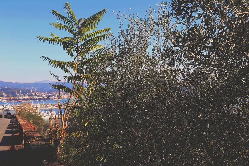 W powietrzu unosił się charakterystyczny, śródziemnomorski zapach rosnących na wzgórzu roślin.