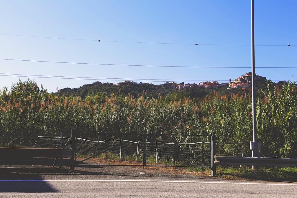 Moje ulubione trawy pampasowe rosnące tuż przy zjeździe z autostrady. Na szczycie wzgórza - jedno z włoskich miasteczek.