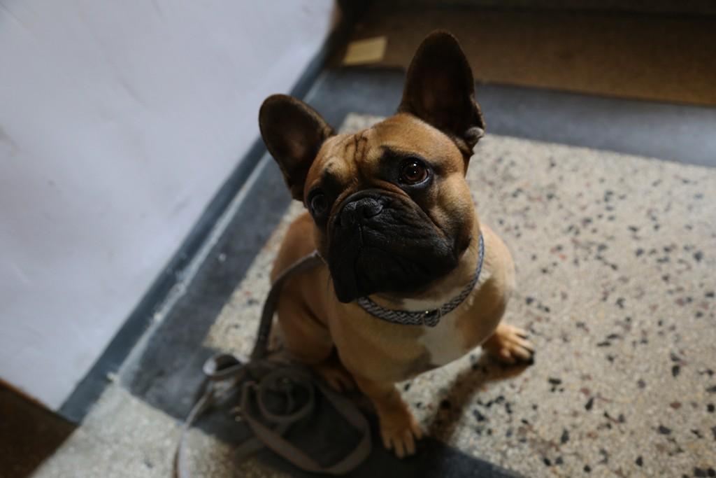 Harvey, pies Wojażerów :)