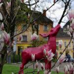 Słynny cieszyński jelonek wśród kwitnących magnolii :)