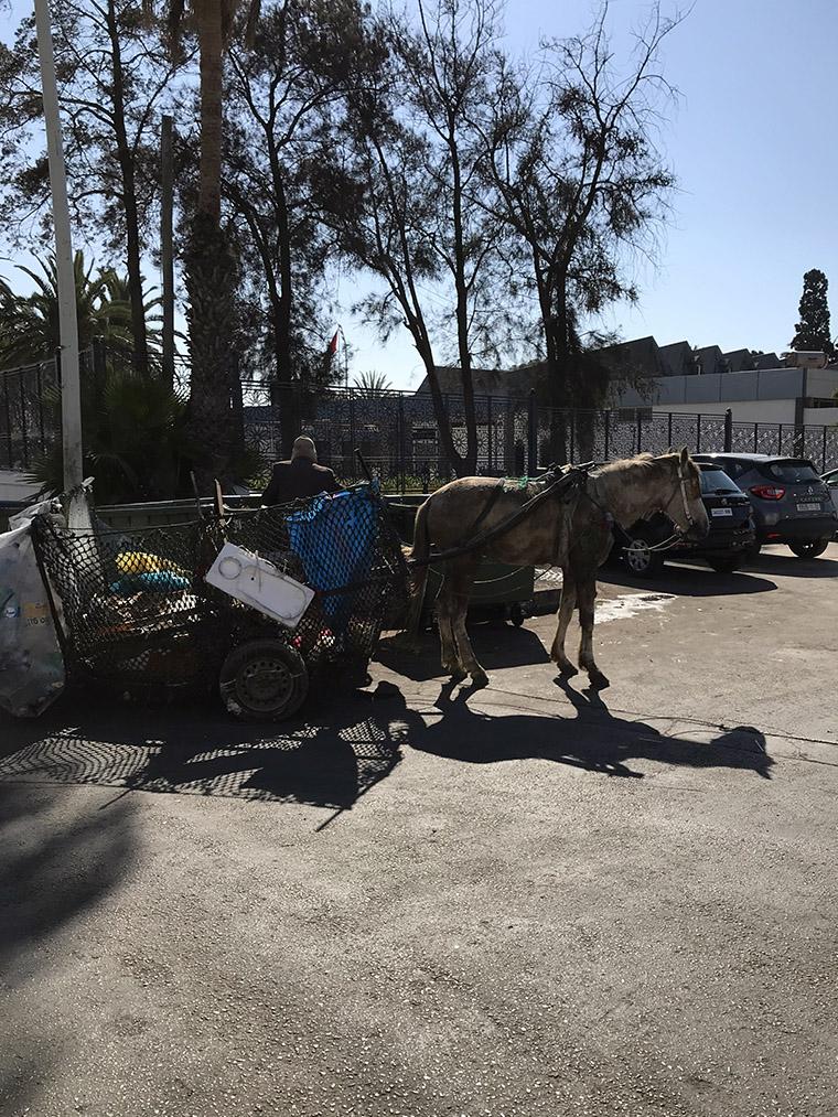 Maroko, kraj kontrastów. Agadir 2019
