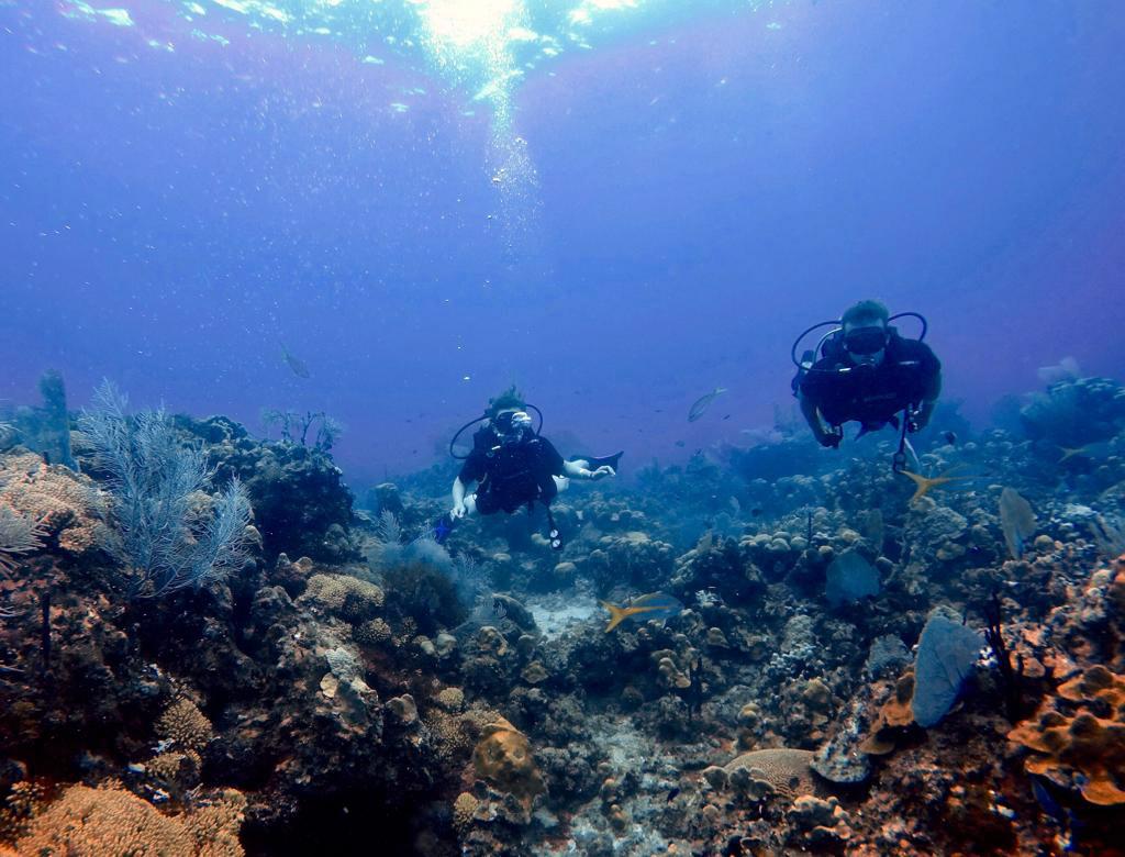 Nurkowanie w Morzu Karaibskim, Dominikana. fot. Leszek Gimel / Scuba Dominicana