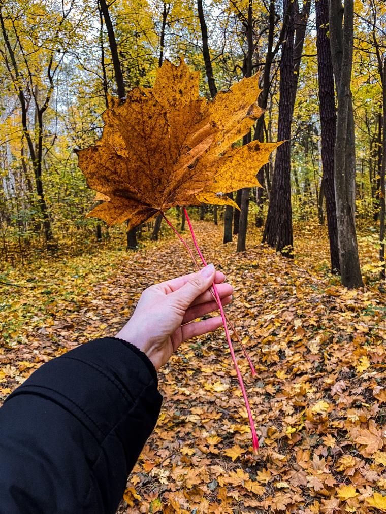 Jesienny spacer na Półwyspie Helskim. Jastarnia, listopad 2020