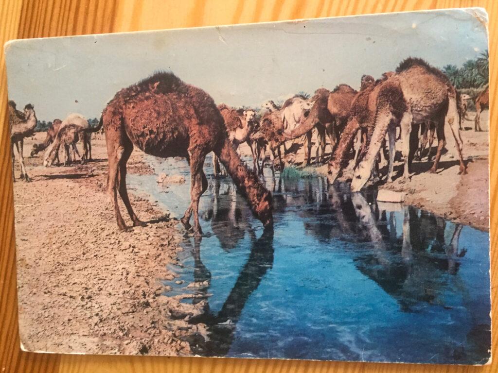 Kolejna pocztówka z Afryki od mojego Dziadka.