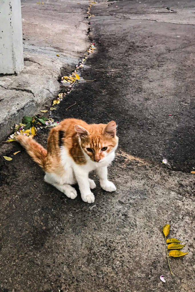 Piękny kociak napotkany na Cyprze