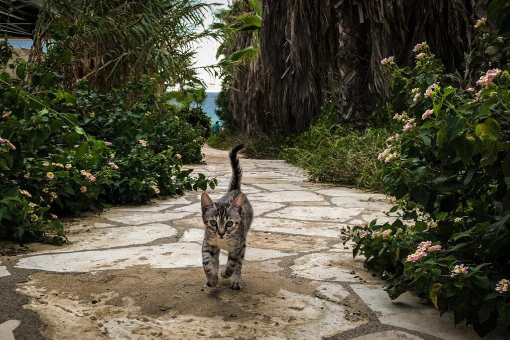 Kociak biegnący wśród palm, Cypr 2018