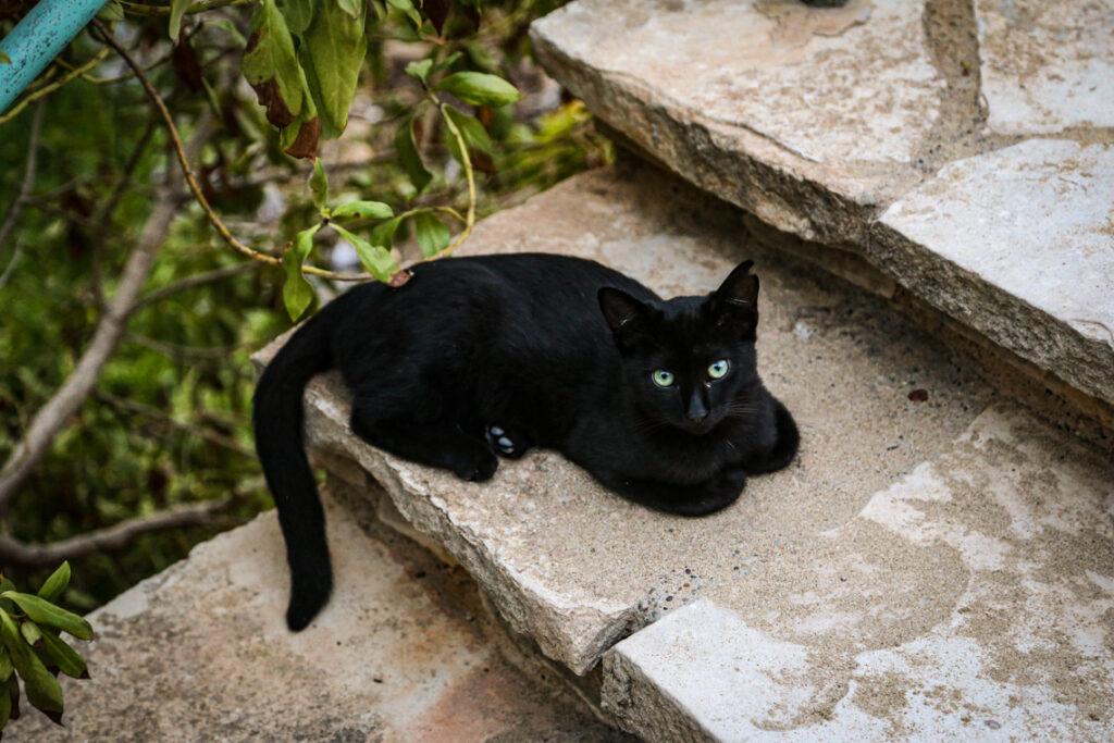 Przepiękny czarny kotek, Cypr 2018
