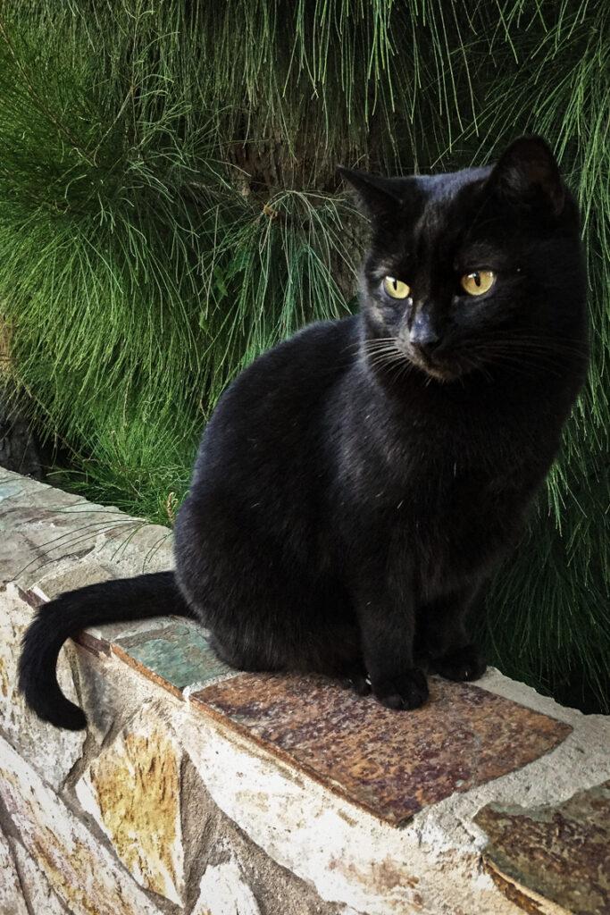 Czarny kot w Costa Calma, Fuerteventura 2017