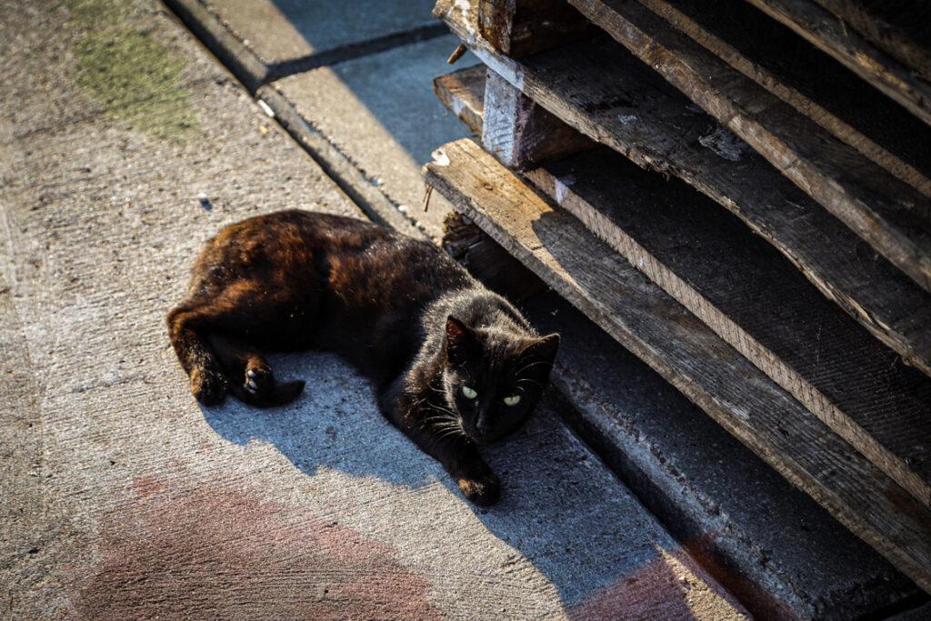 Kot napotkany w Helu