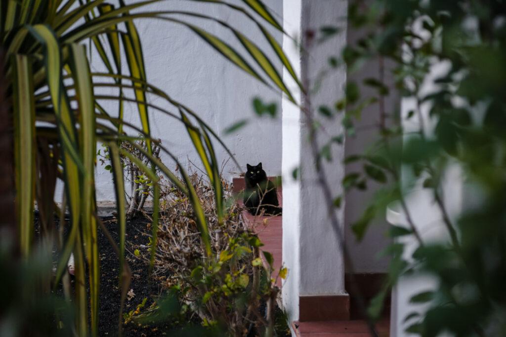 I see you! ~ Fuerteventura 2018