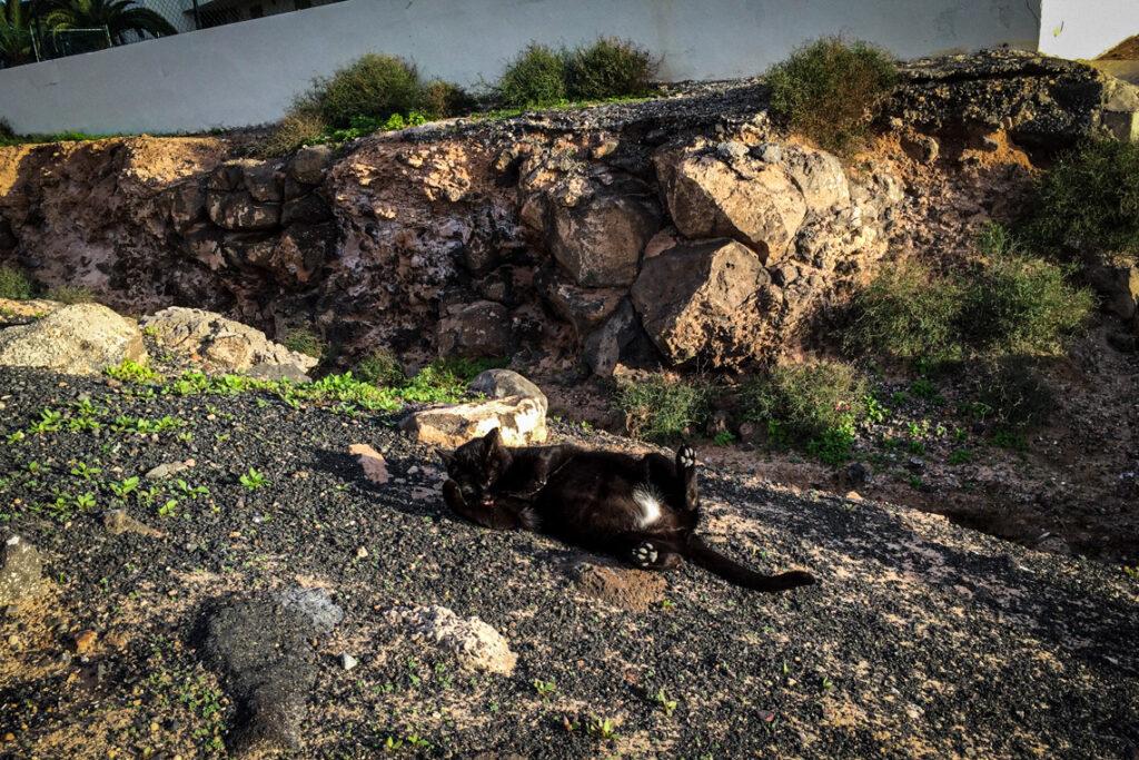 Kocie lenistwo w Playa Blanca ;) Lanzarote 2014