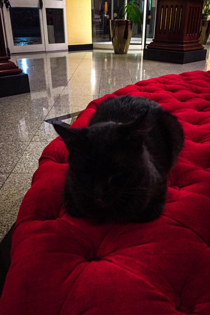 Tu jest jakby luksusowo... ;) Czarny kot w hotelu RIU Palace Madeira. Caniço de Baixo, Madera, Portugalia 2015