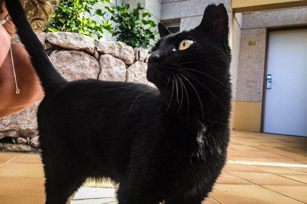 Czarny kot w hotelu SBH Monica Beach. Costa Calma, Fuerteventura 2017