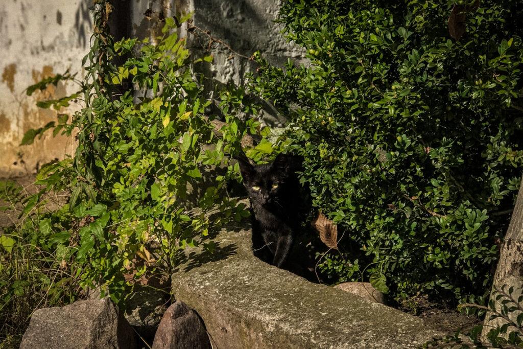 Czarny kociak w Gdyni, 2018 rok