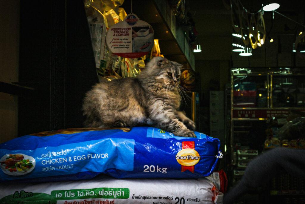 Kot w jednym ze sklepów w Hongkongu