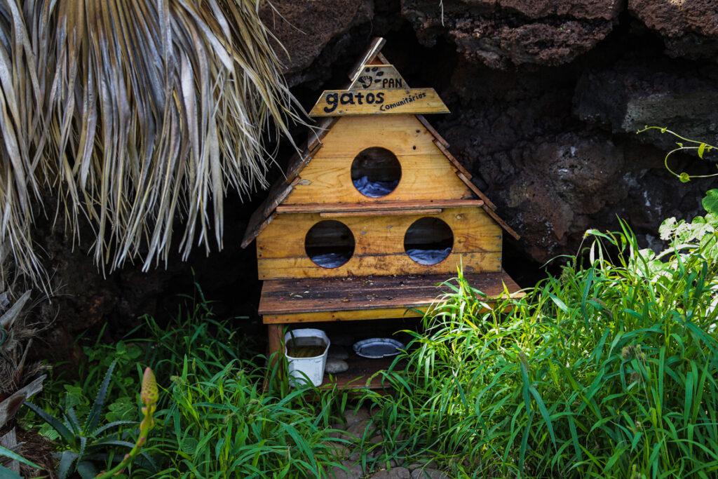 Kocie domki na Maderze, Caniço de Baixo 2015