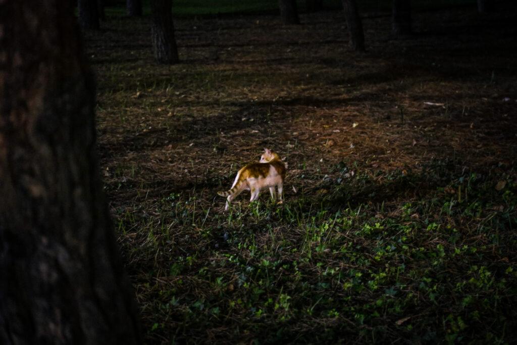 Kot w parku w Cambrils, Hiszpania 2016