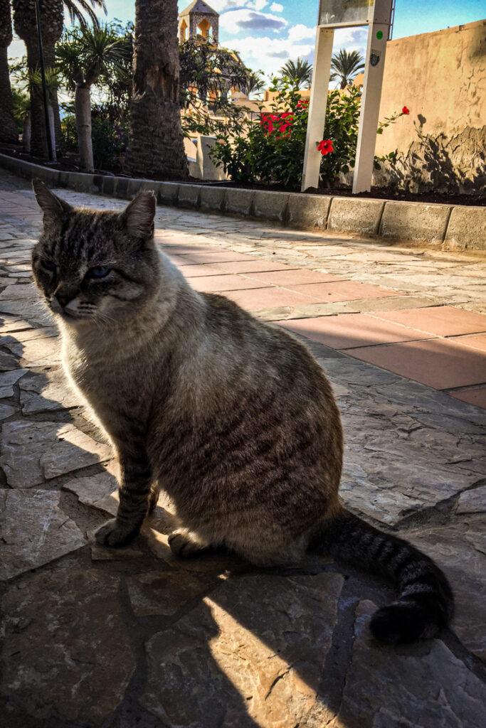 Kot w SBH Monica Beach, Fuerteventura 2017