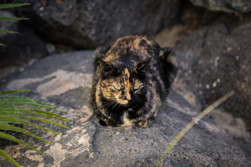 Jeden z kanaryjskich kotków, Fuerteventura 2018