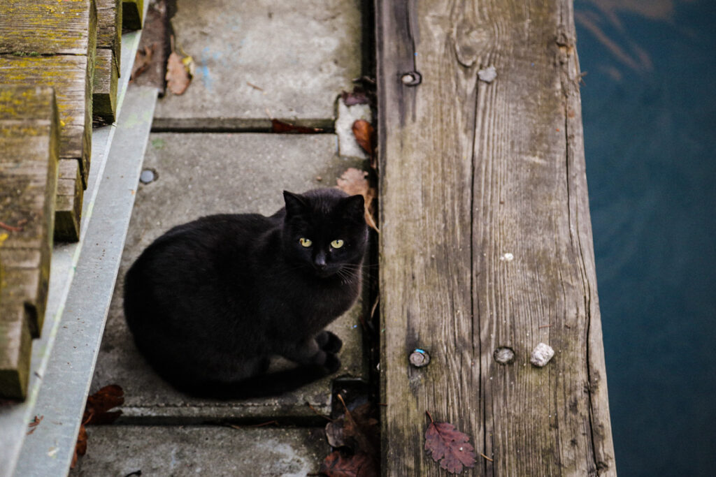 Kot w gdyńskim porcie. Gdynia 2016