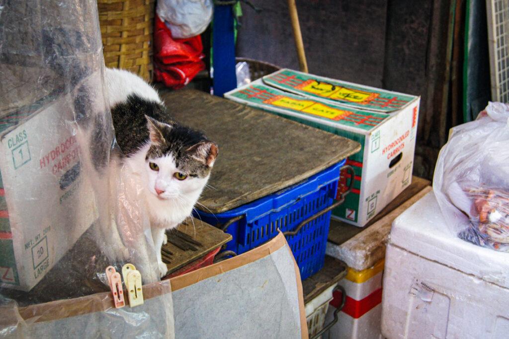 Sklepy i targowiska - popularne kocie miejsca na ulicach Hongkongu