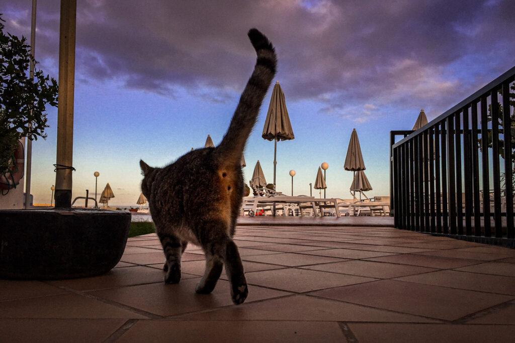 Wypiął się na nas. Kot w hotelu SBH Monica Beach, Fuerteventura 2017