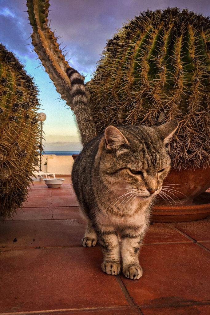 Pośród kaktusów. Fuerteventura 2017