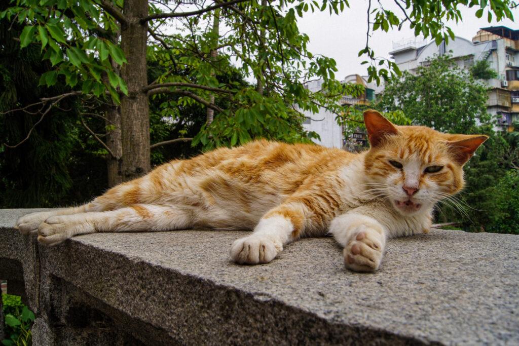 Kot napotkany w Makau, Chiny 2013