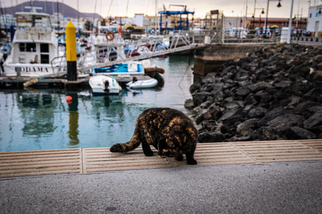 Kot w marinie w Corralejo, Fuerteventura 2018