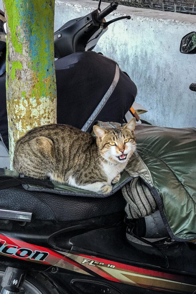 Kolejna kocia miejscówka ma motorze ;) Agadir, Maroko 2019
