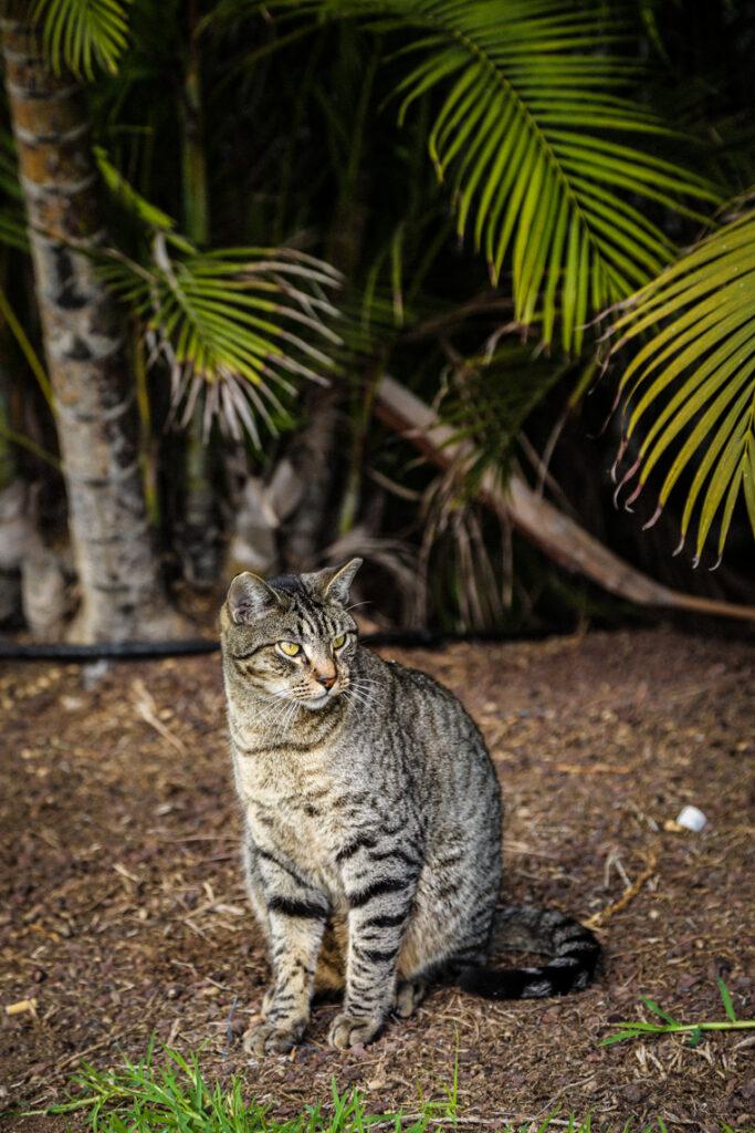 Szare kocisko pośród palm, Fuerteventura 2018