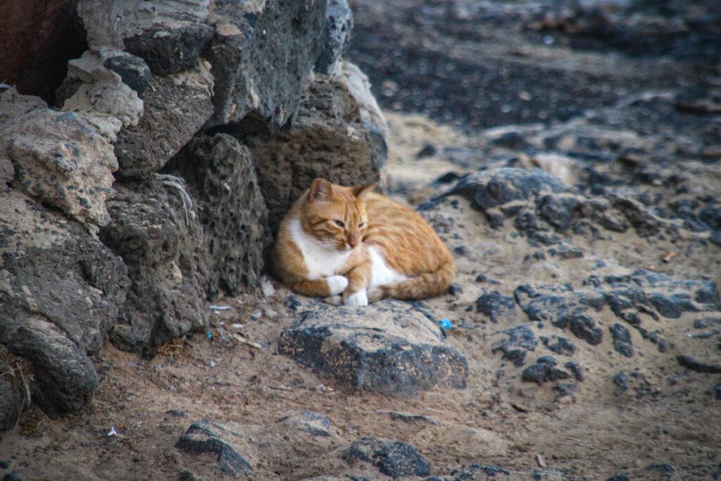Odpoczynek na skałach. Fuerteventura, Hiszpania 2013