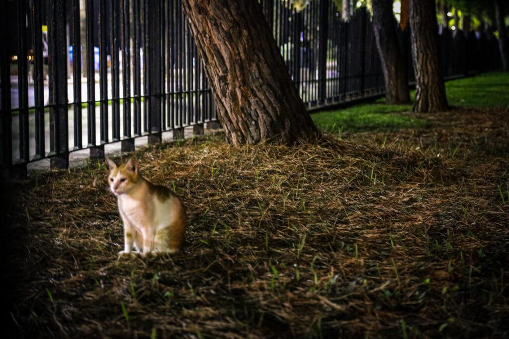 Kot napotkany w parku w Cambrils, Hiszpania 2016