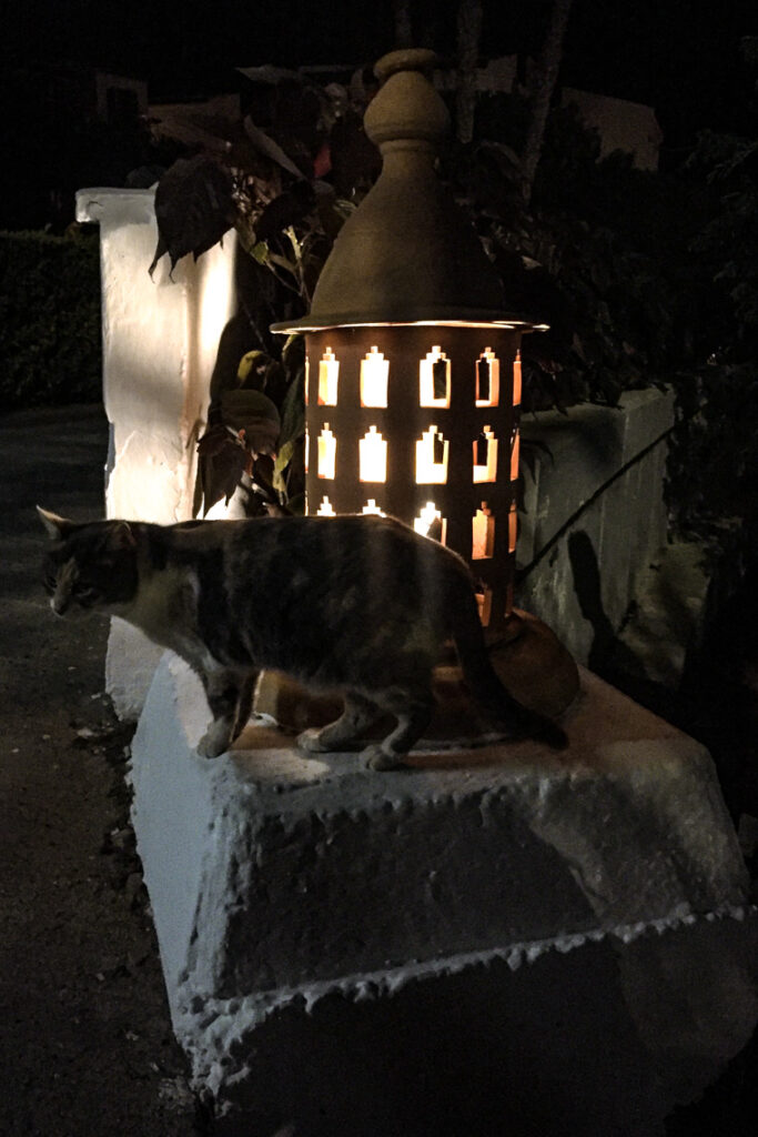 Kot wieczorową porą w hotelu Fuerteventura Princess