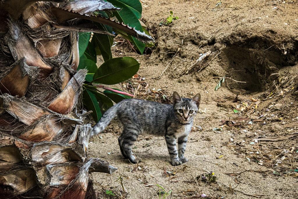 Mały kotek przy palmie, Cypr 2018
