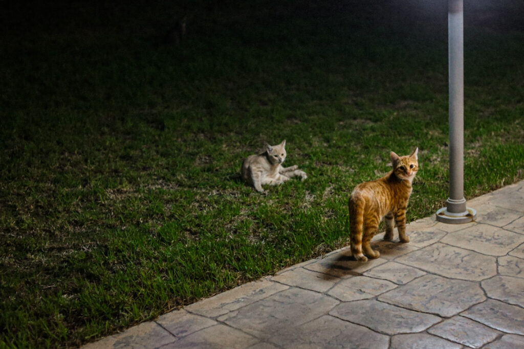 Hotelowe kotki. Ayia Napa, Cypr 2018