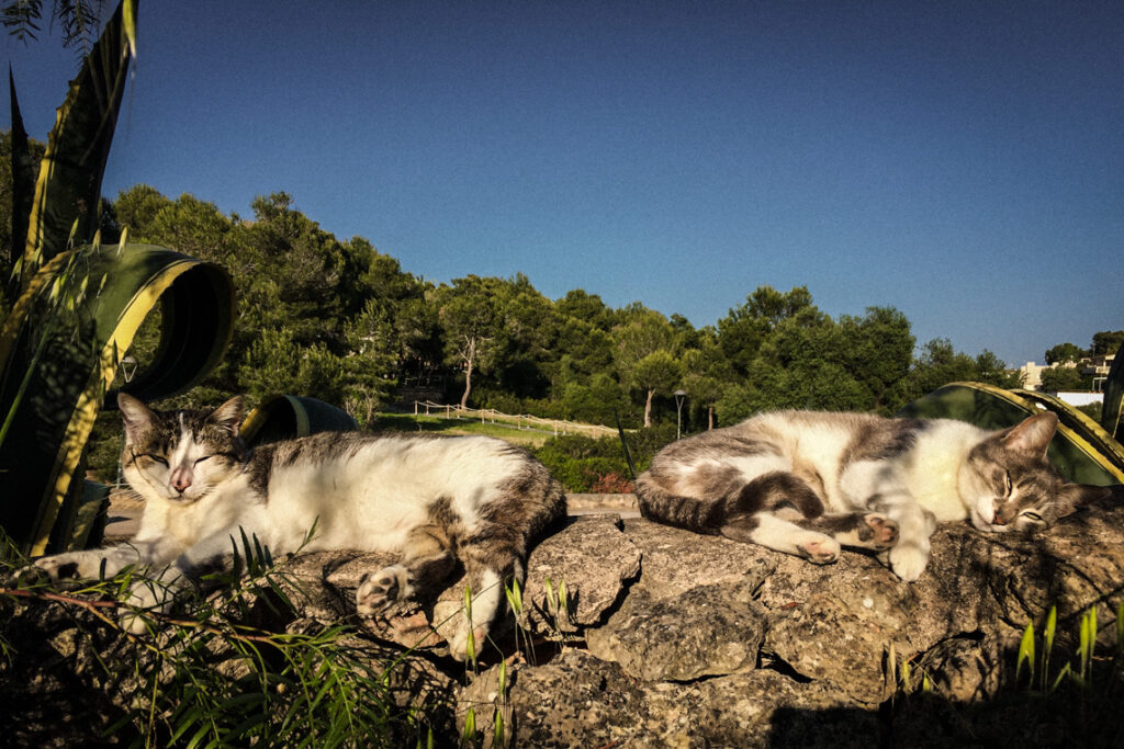Koty wygrzewające się w słońcu na Majorce