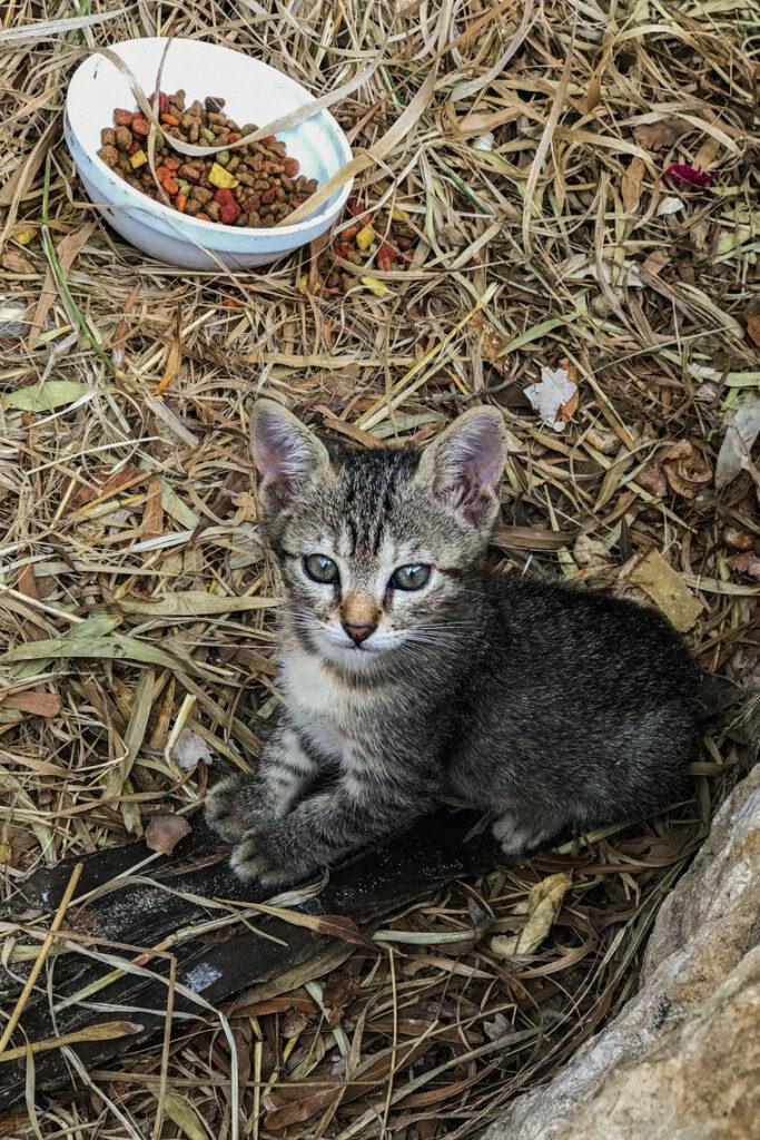 Mały kotek w Ayia Napa, Cypr 2018