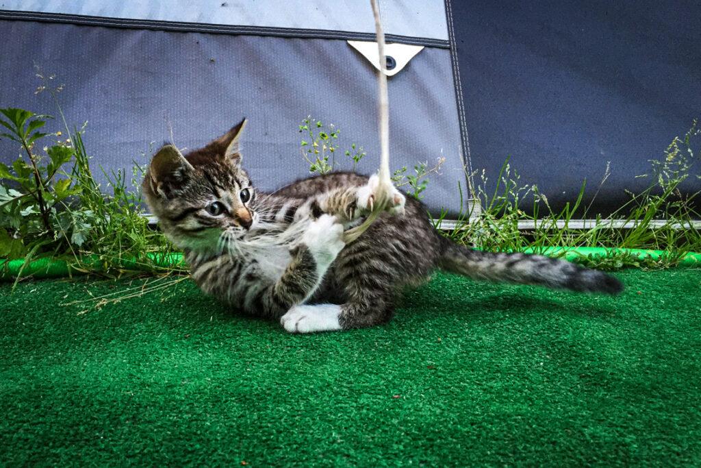 Mały kotek na campingu Maszoperia w Jastarni