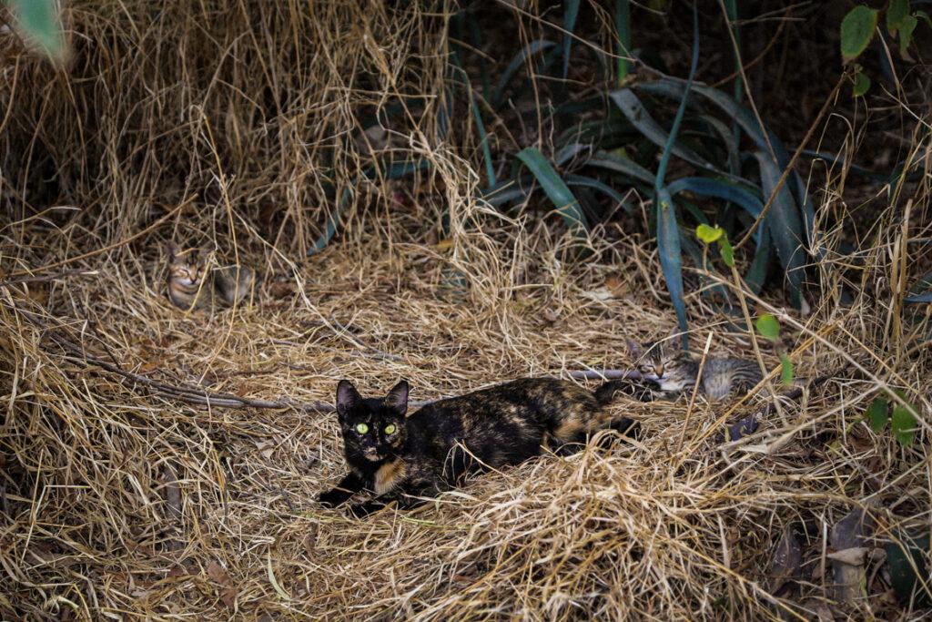 Rodzina kotów na Cyprze