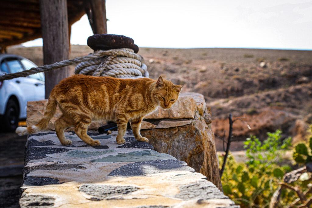 Rudy kot w miejscowości Ajuy na Fuerteventurze