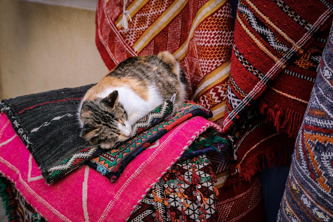 Kot śpiący na marokańskich dywanach. Essaouira, Maroko 2019
