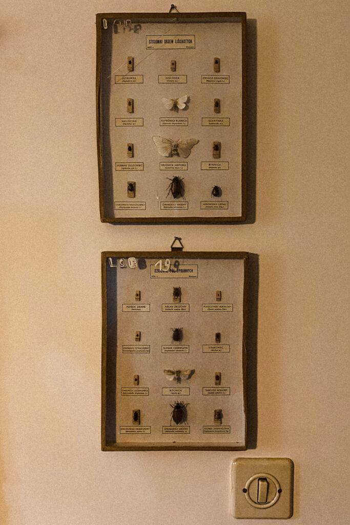 Kolekcja entomologiczna. Uboga Krewna, Gdynia